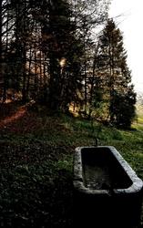 La fontaine de la forêt