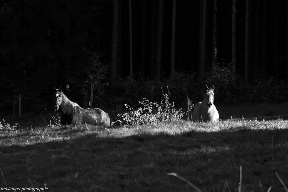 Sous le regard des chevaux