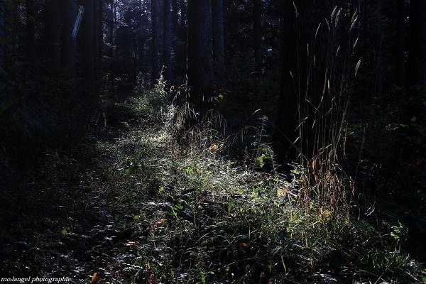 Le coeur de la forêt baigné de lumière