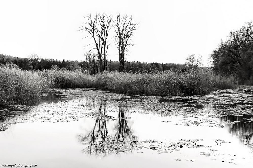 Les jumeaux du marais