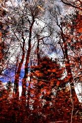 Les esprits de la forêt #2
