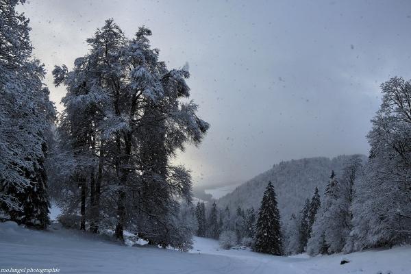 Doux flocons de neige