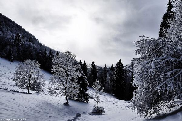 Au pays des neiges