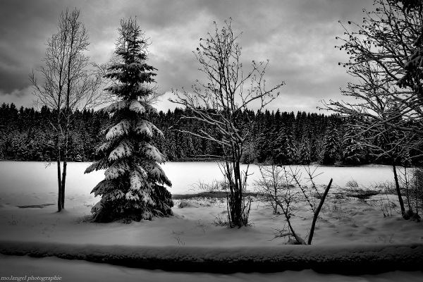 L'étang en hiver