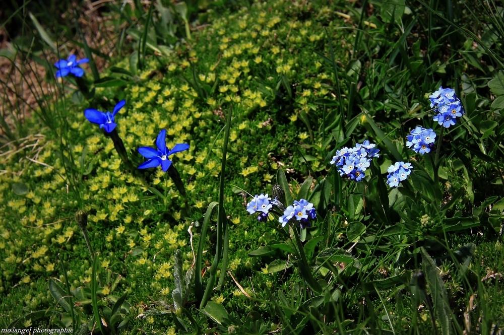 Break pour cause d'un printemps de plus