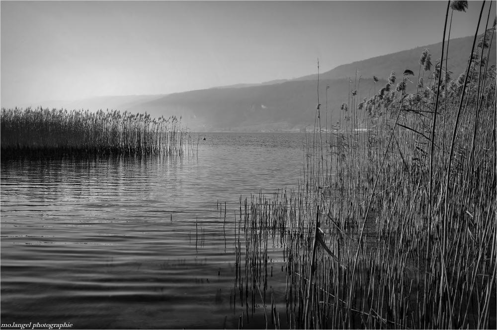 Les roseaux du lac