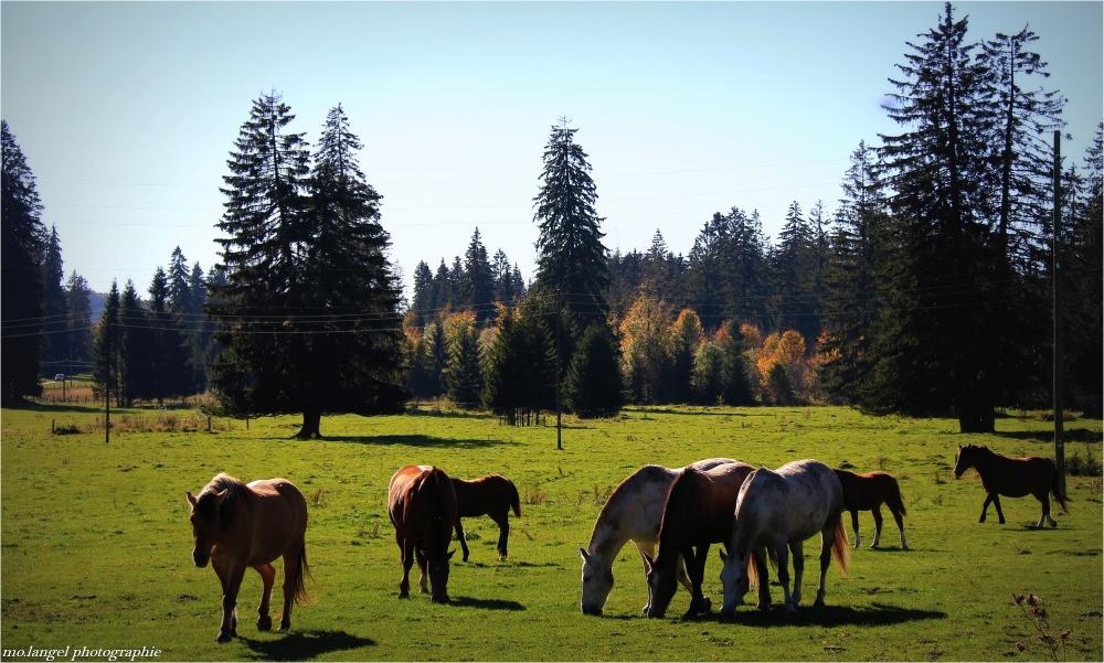 Les petits chevaux