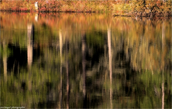 Les couleurs de l'étang