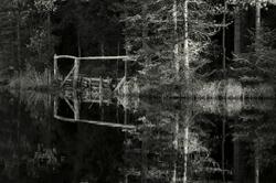 Sur le bord de l'étang