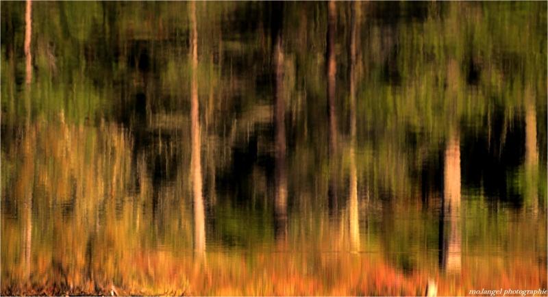 Songe d'un après midi d'automne