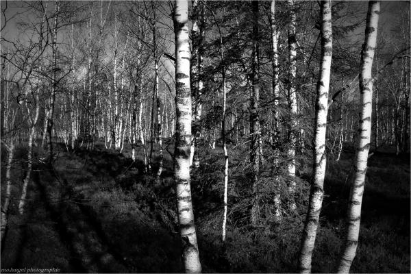 S'imprégner de l'odeur du bois