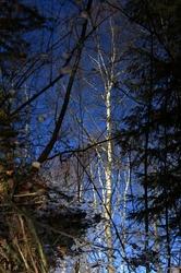 La forêt engloutie