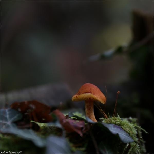 Le petit champignon