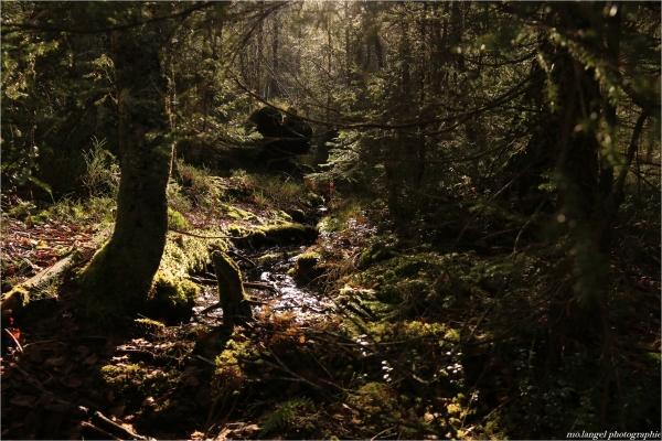 Promenons-nous dans les bois #2