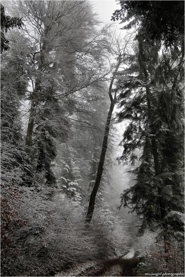 Balade hivernale #4