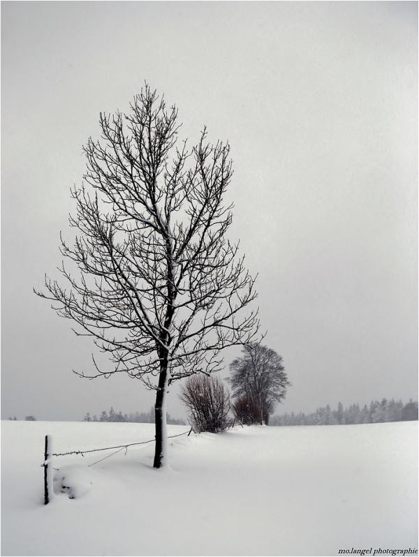 La campagne en hiver