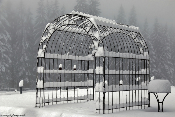 L'hiver en cage