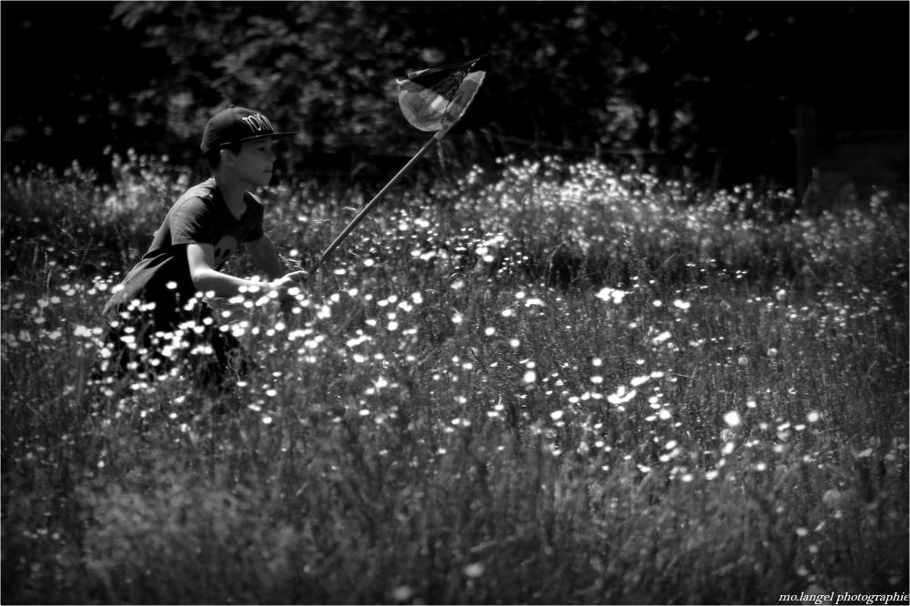 A la chasse aux papillons