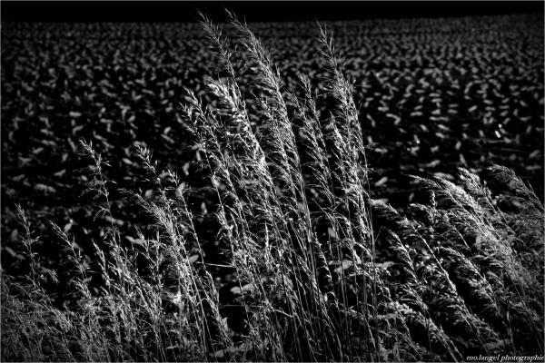 Herbes des prés et herbes des champs