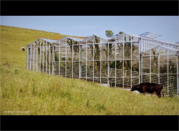 L'exotisme en cage