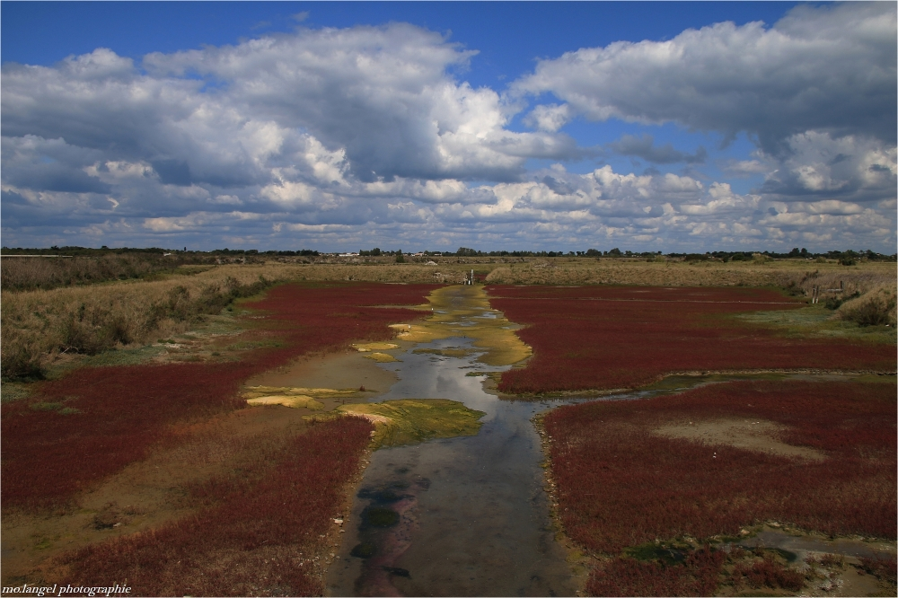 La couleur des marais