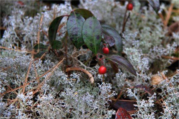Sur un parterre de lichen