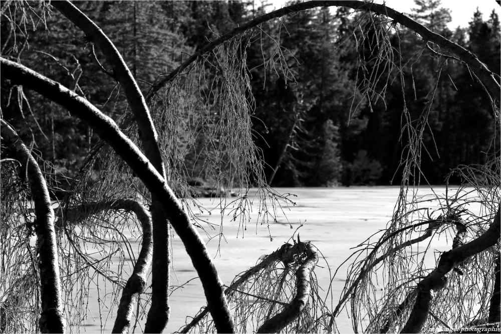 Sous la voûte des branches