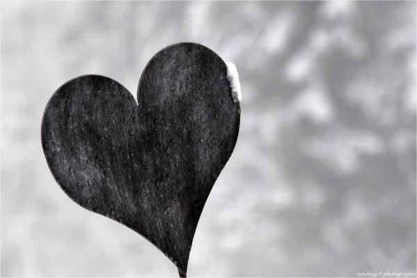 Joyeuse Saint Valentin   Happy Valentine's day