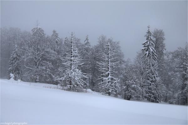 Randonnée hivernale (2)