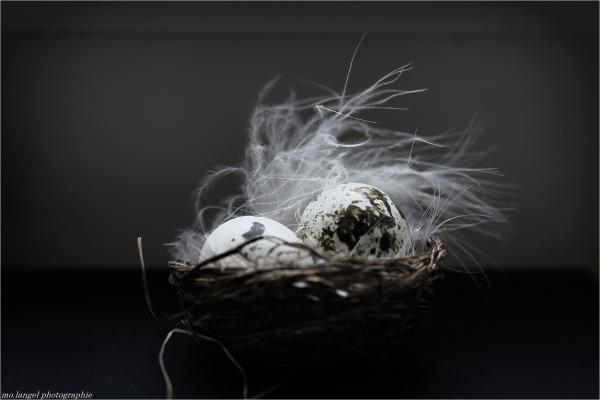 Joyeuses Pâques - Happy Easter