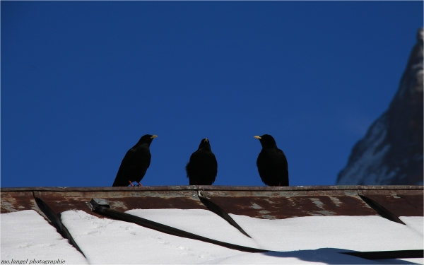 Les Trois Amis