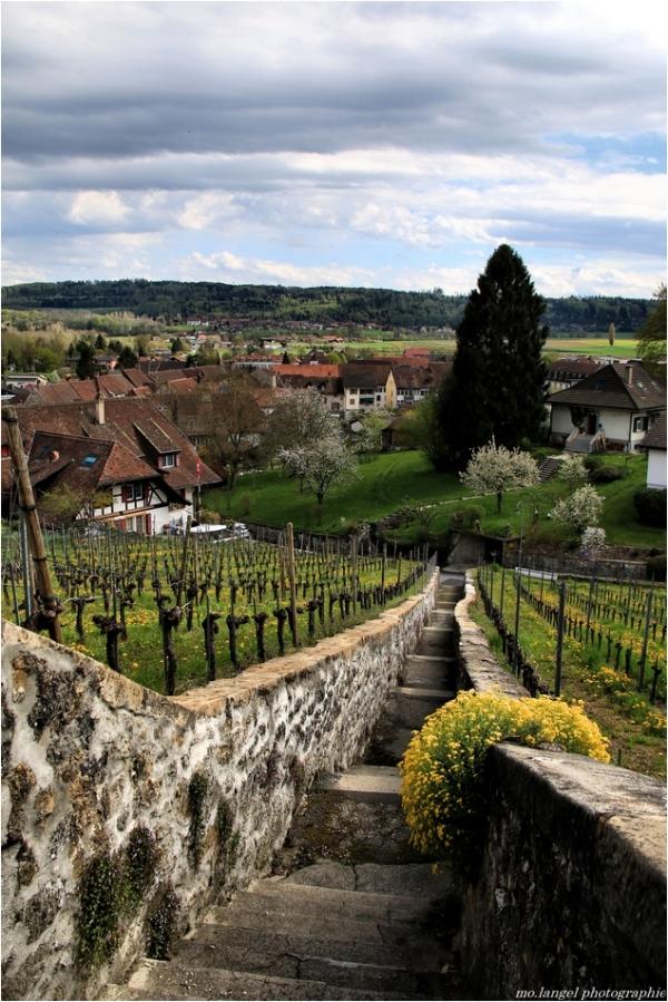 Les escaliers de la vigne
