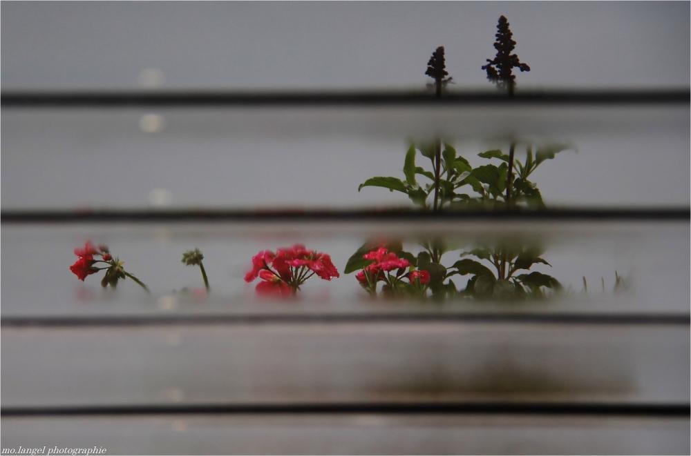 Reflets sur terrasse