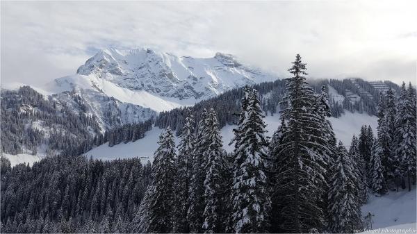 La montagne et les grands sapins