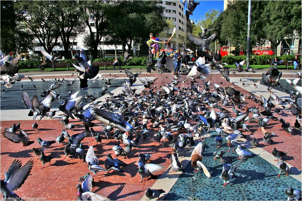 Histoire de pigeons