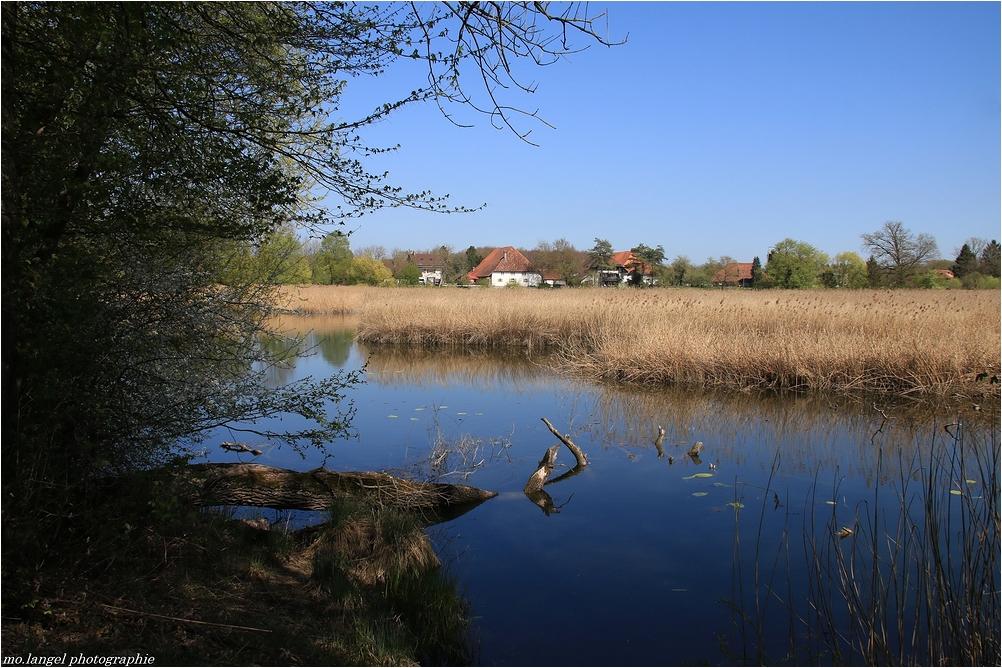 Dans le marais (2)