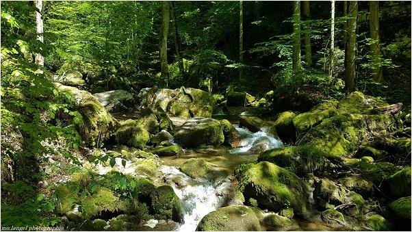 Un bain de chlorophylle