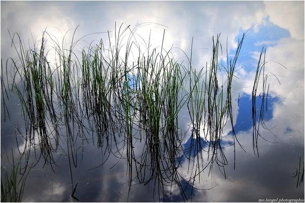 Les herbes dans les nuages