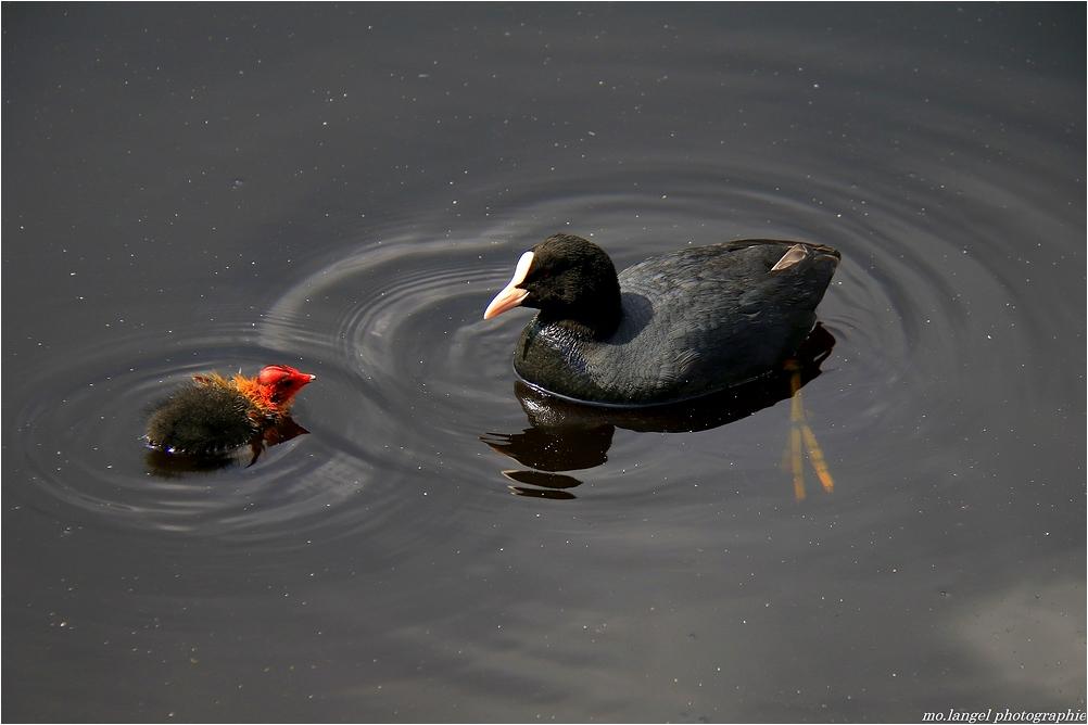 Maman, je fais aussi des ronds dans l'eau