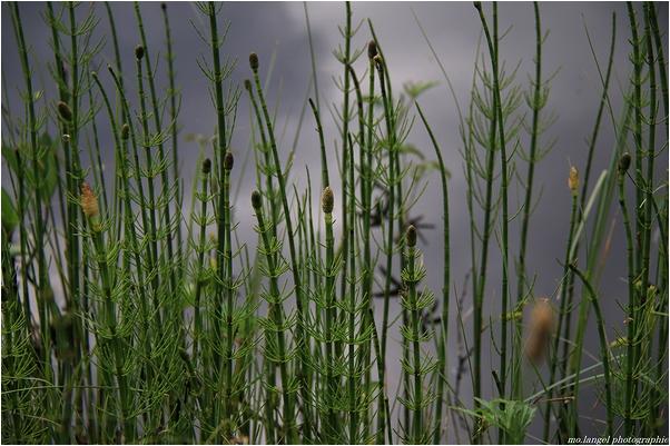 Les herbes de l'étang