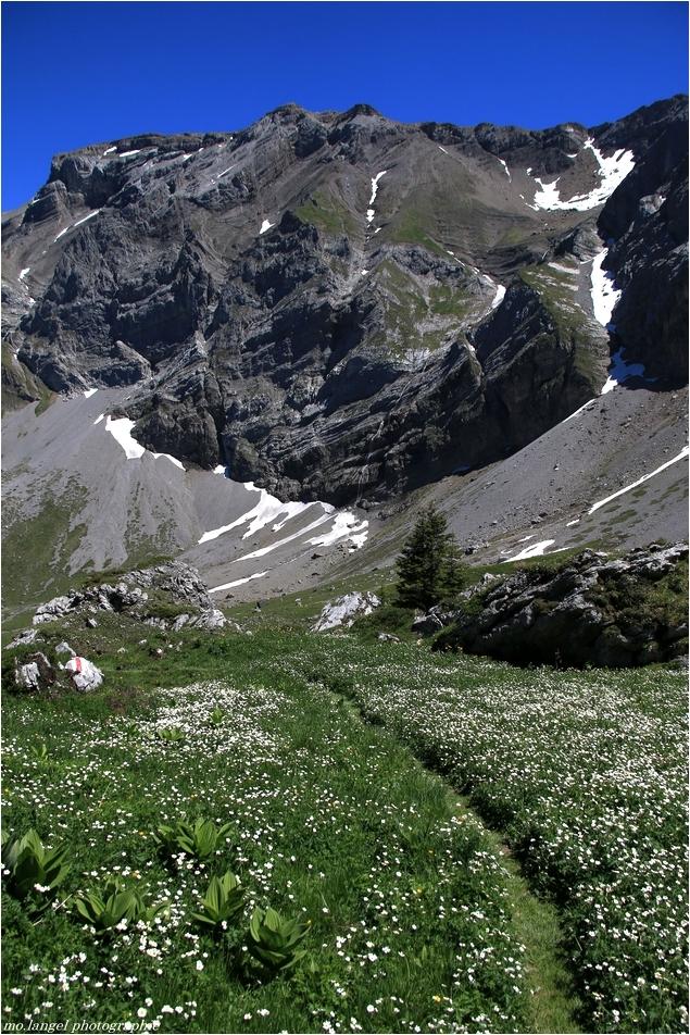 Sur les sentiers de montagnes (4)