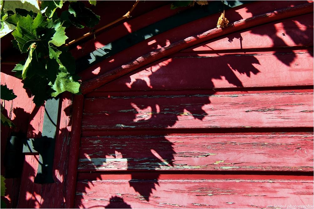 L'ombre de la vigne