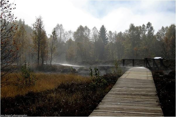 La brume se lève dans les tourbières