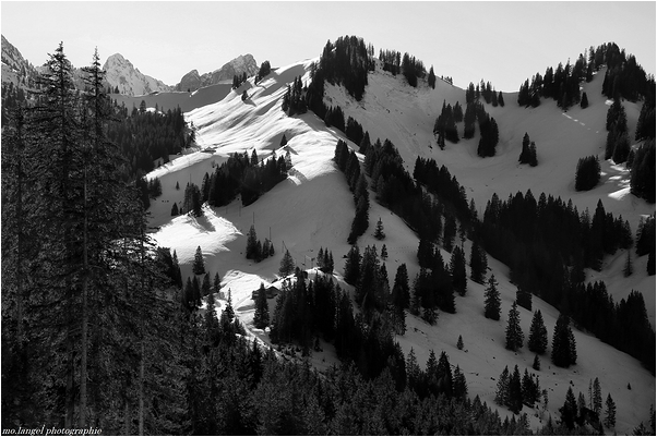 Montagnes et sapins