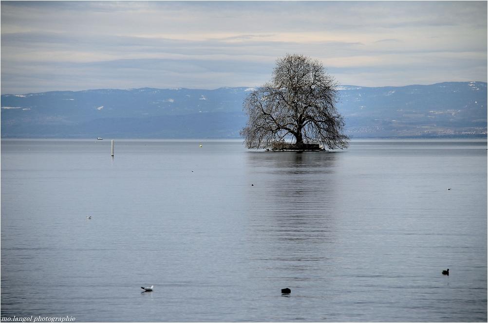 L'arbre sur le lac
