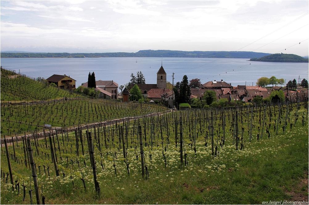 Le village au creux des vignes