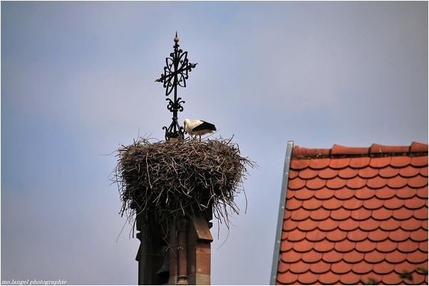Perchée sur le clocher
