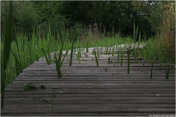 Le ponton verdoyant