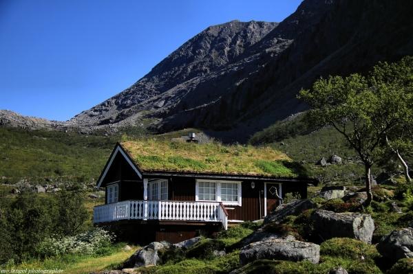 La maison à la toiture végétale