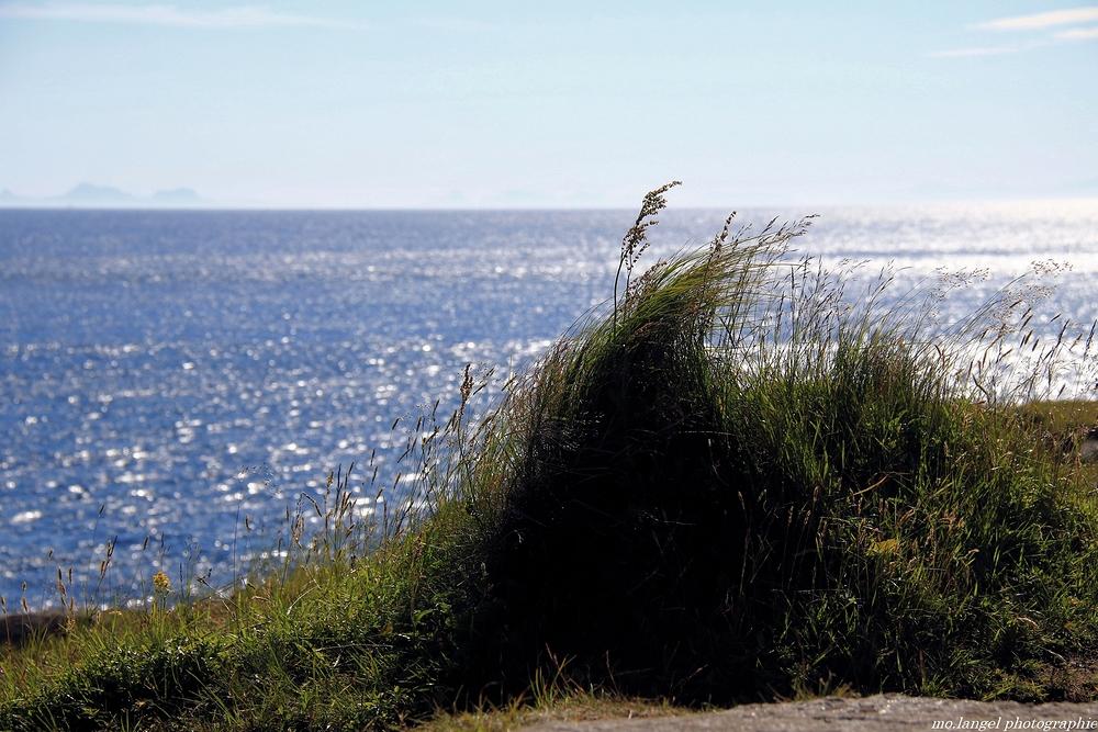 Le vent dans les herbes